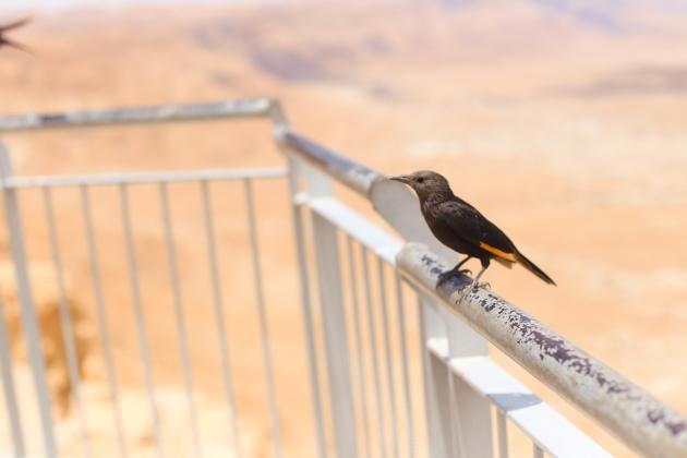 Masada (7 of 19)
