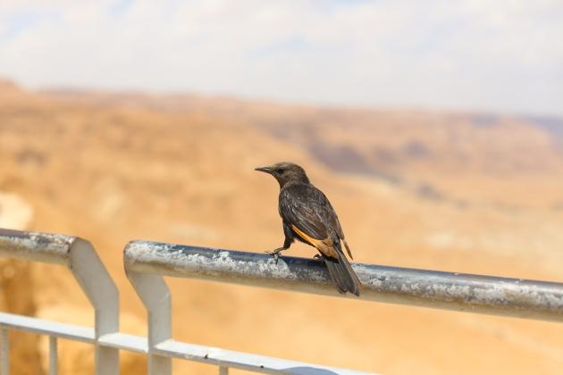 Masada (8 of 19)